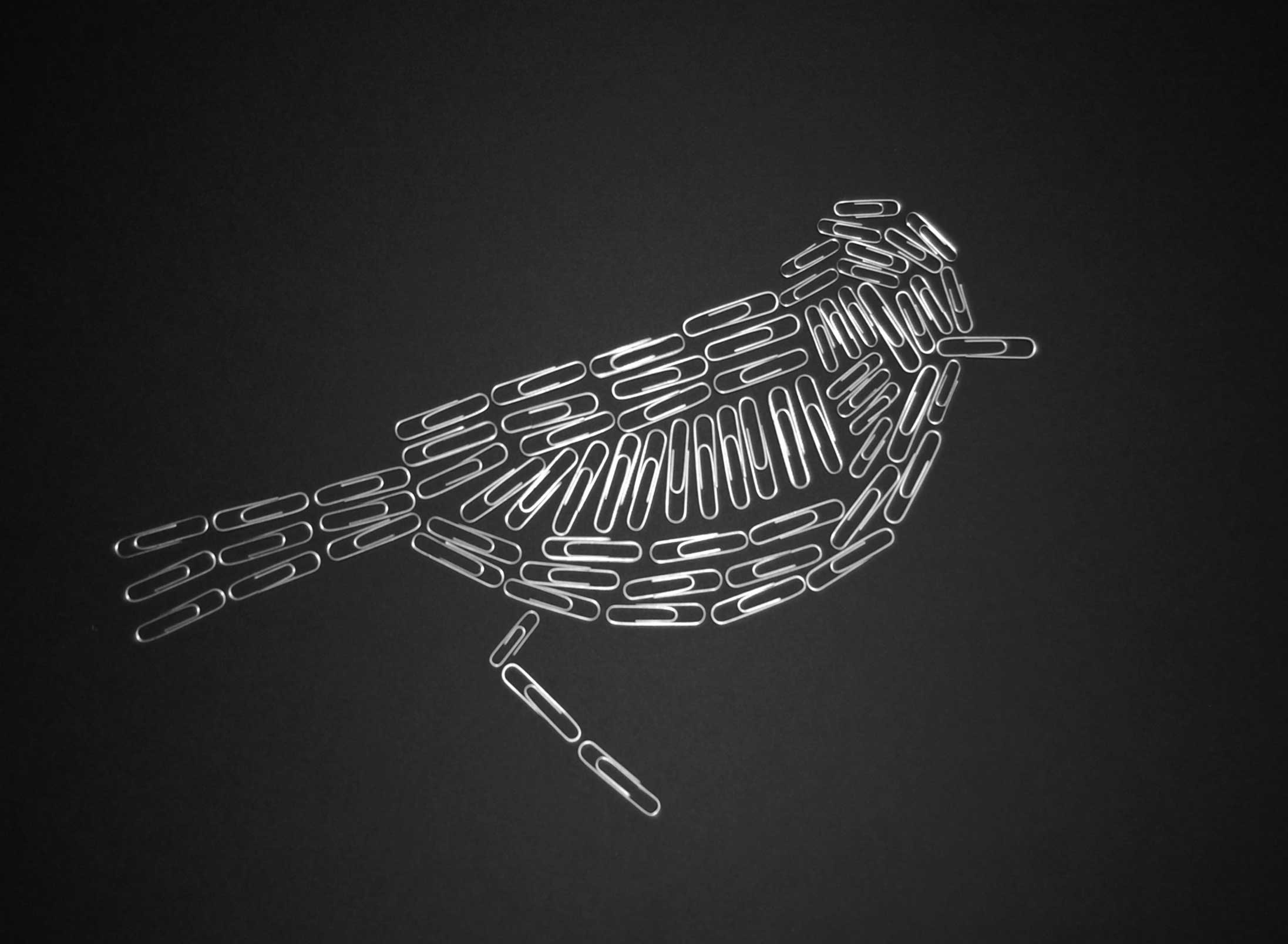 6. paper clip bird | bird-a-day art
