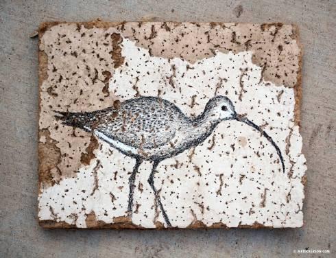 Attic-Insulation-Bird