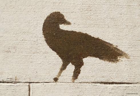 Oil-Bird