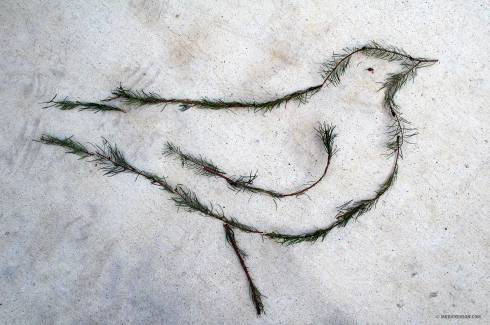 Tree-Trimming-Bird