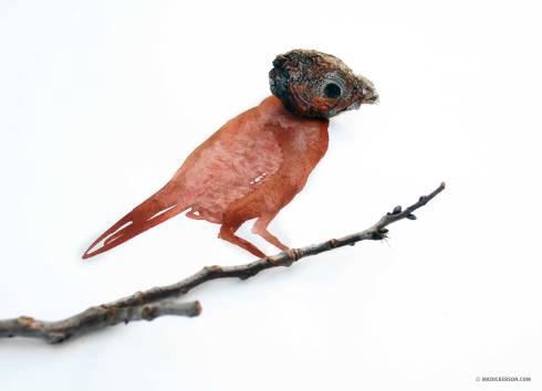 Wood-Chip-Bird